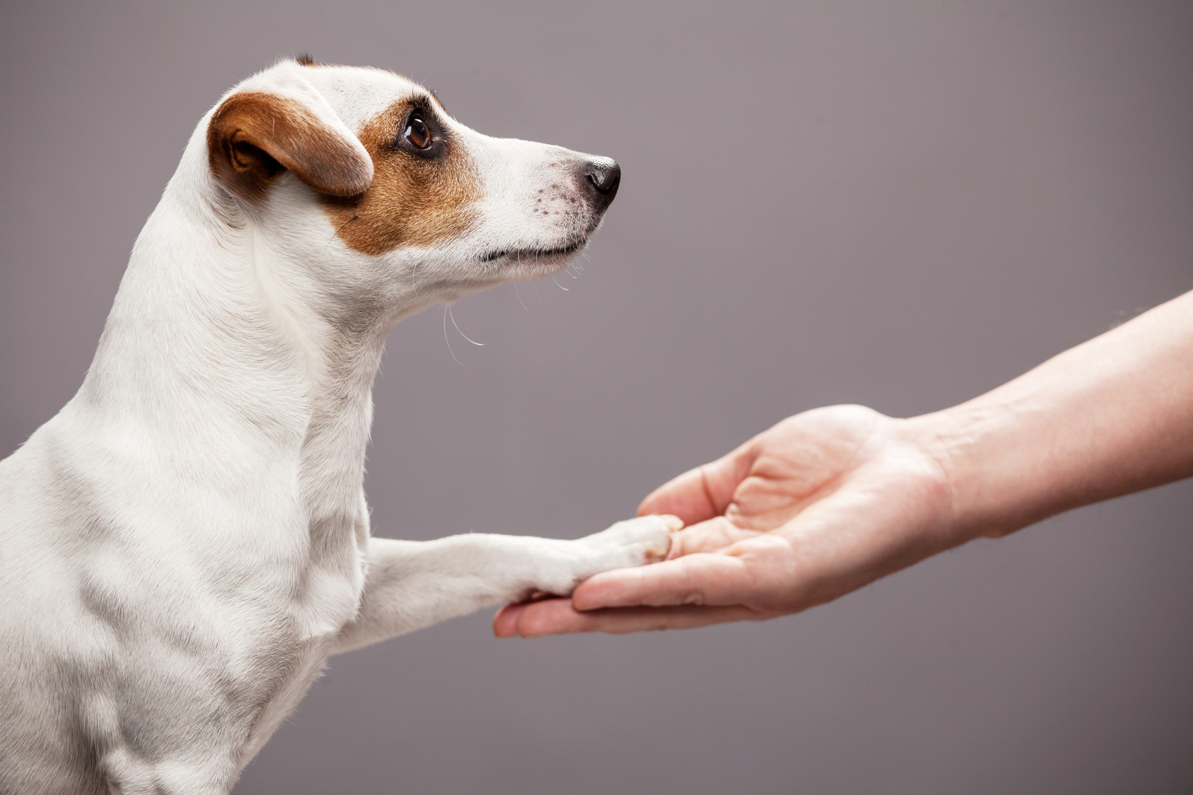 Business Idea: A Helping Hand for Dog Owners