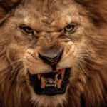 Entrepreneurial Ego and The Beast